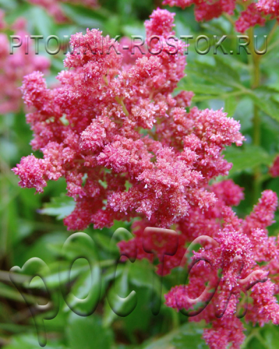 Fireberry®